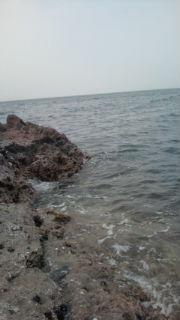 由良港沖磯の黒鯛・アジ釣行